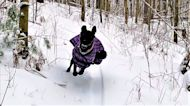 Overjoyed puppy's first run in the forest is a beautiful sight