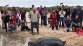 「世界最大海龜」擱淺救援人員暖助!272公斤身軀一步步爬回大海 感動眾人