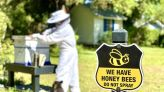 When you spray the yard against mosquitos, you're killing bees, too