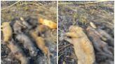 屏縣9隻幼犬疑遭惡意燒死 眾人大罵:燒狗下地獄
