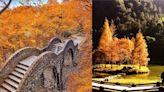 真的不是日本!台灣七大絕美賞楓景點,「走進滿天楓紅,太浪漫~」