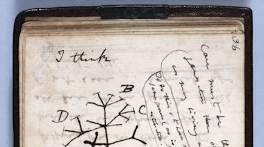 Charles Darwin notebooks stolen from Cambridge library reported missing after 20 years