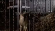 Police and Firefighters on Vancouver Island Free Deer Stuck in Fence