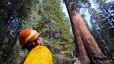 'We dodged a bullet.' Sequoias believed largely spared by California's KNP Complex Fire