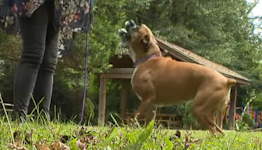 Georgia Dog Gets Second Chance After New Cancer Treatment Saves Her Life: 'It's a Shock'