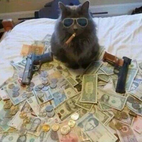 """¿Algo para relajarse : Se busca a despiadado líder de conocido cartel ... llamado """"El Gato"""" ...?"""