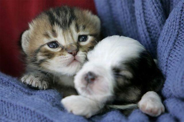 ¿Mi papa me dijo si quería un gato o un perro pero no se que elegir me ayudan?