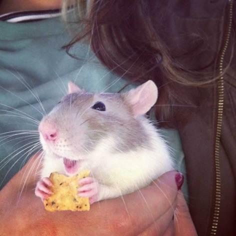 ¿Son los roedores los animales mas tiernos del mundo? x3?