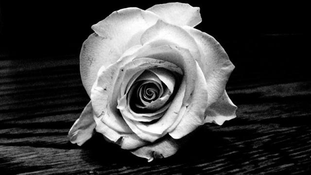 Fotos em preto e branco, você curte?