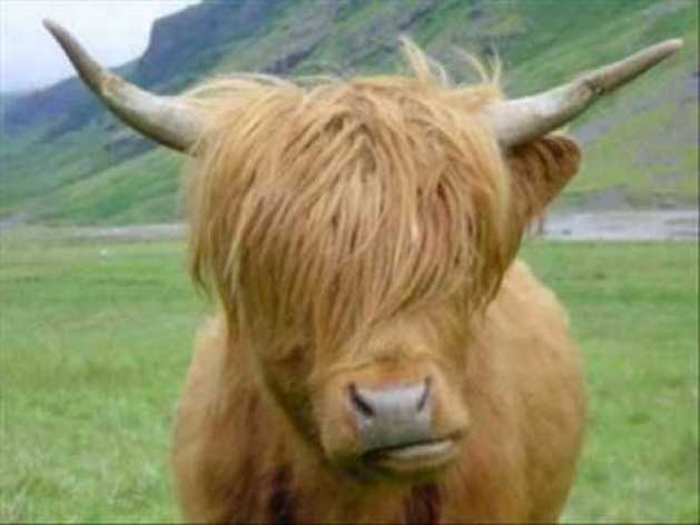 ¿Si flakaman es viejo y decrepito porque se dice que está como un toro?