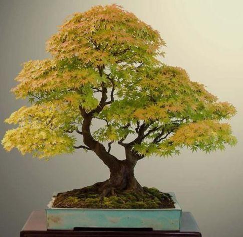 Há um princípio inteligente (espiritual?) até nos seres não humanos? As plantas têm inteligência?