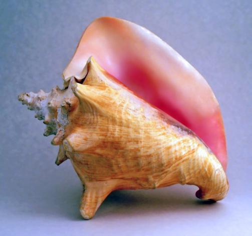 ¿Porque la caparazòn del caracol de mar, al ponerlo cerca del oìdo, asemeja al ruido de las olas de mar.chan-chan?