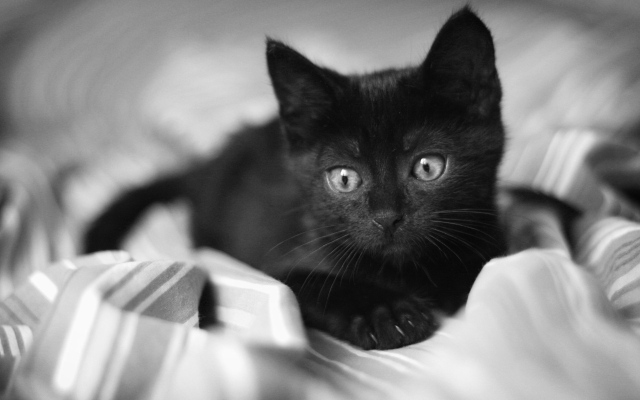 ¿Esta bonito el gatito?