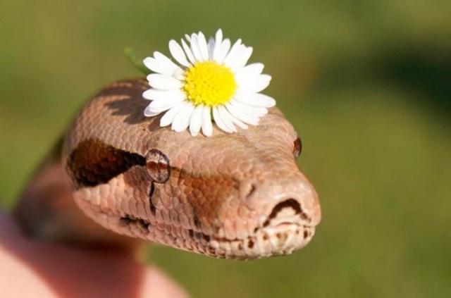 Do you like snakes?