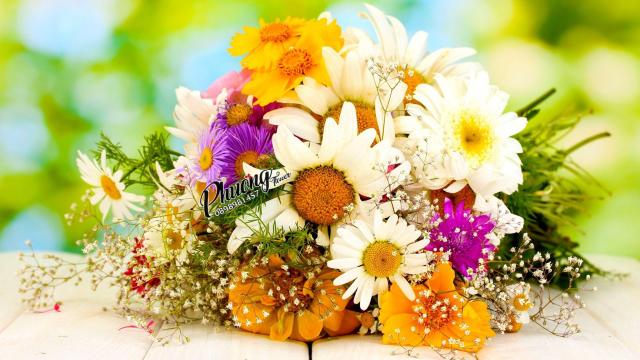 Đặt Hoa Online HCM Giá rẻ ? Theo mọi người đặt ở đâu giá rẻ nhất, Hàng chất lượng, Cắm hoa chuyên nghiệp ? Hãy đến http://phuongflower nhé?