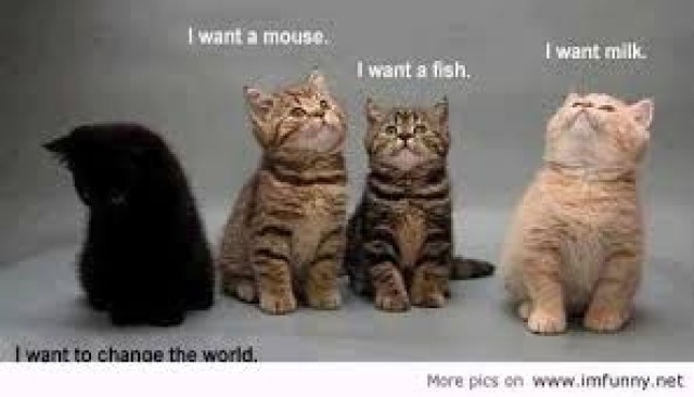 Poll: Which cat describes you? (pic included)?