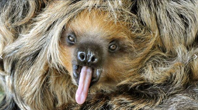 Mit welchem Tier hast du am ehesten Ähnlichkeit, nicht unbedingt optisch?