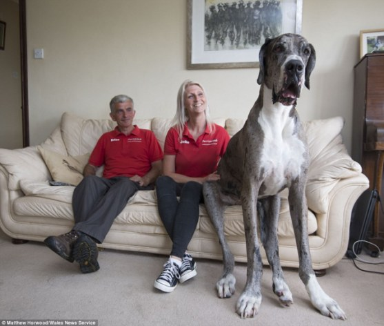Do you like Freddy he's the biggest dog in the whole world 🌎?