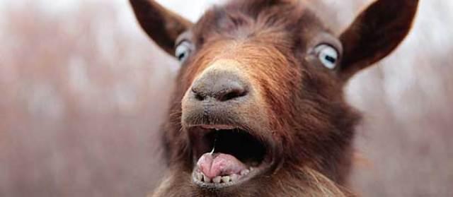 Have you ever heard a goat say Baaaa?