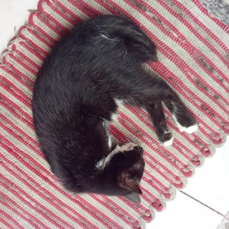 Kucing ane lemes, ga bergairah, lesu dan letih.. Ga mau makan jg.. Solusinya apa yak?