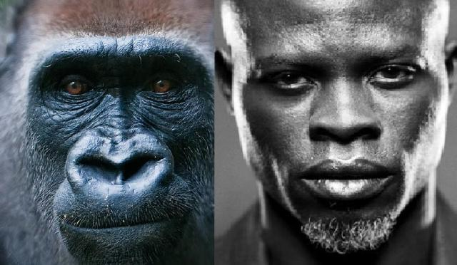 Why are Black people so ugly and look like apes?