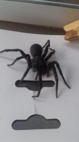 Alguém sabe o nome dessa aranha? É venenosa?