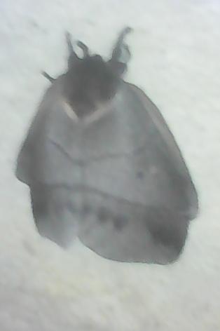 Que bicho é esse? É uma borboleta mesmo? Mas CE a cabeça? E essas patas? Besouro? Aranha?