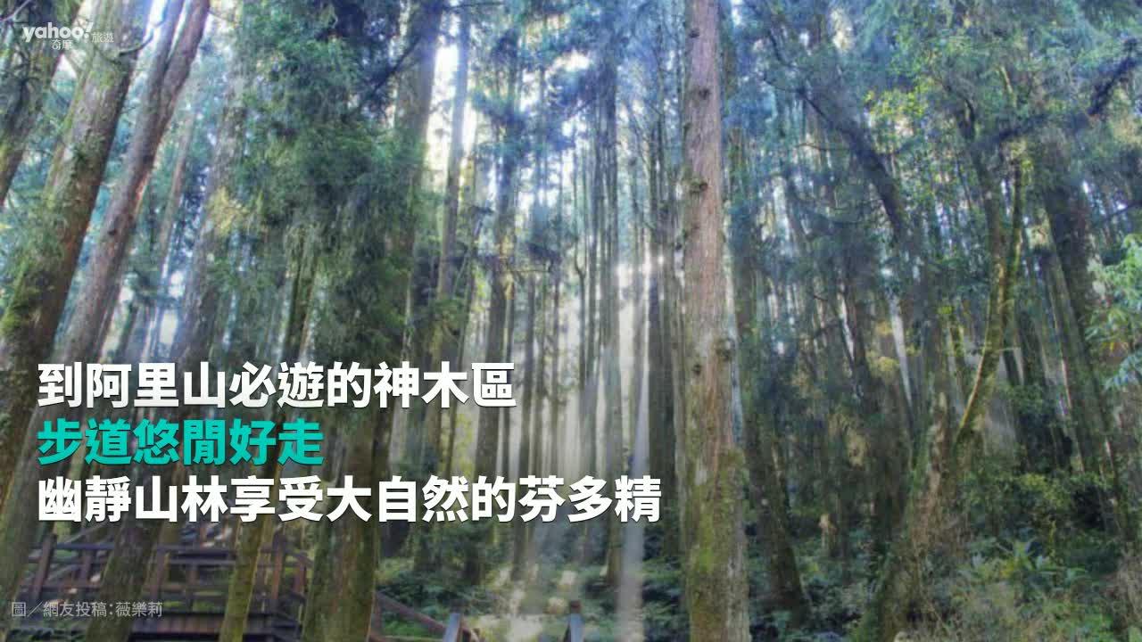 【Y小編帶你吃喝玩樂】夏日限定~賞螢景點快筆記