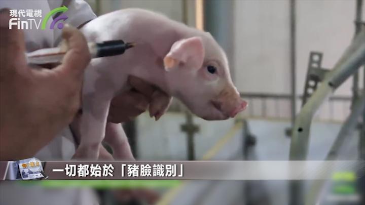 為豬做護理、給奶牛催情的生意,終究還是要交給程序員