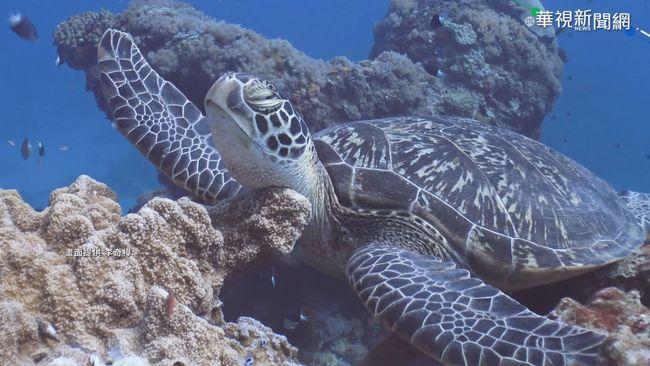離島團客補助 觀光局同意納綠島.蘭嶼