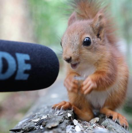 這個爆紅網路的小紅松鼠療癒吃播背後有個暖人的故事~