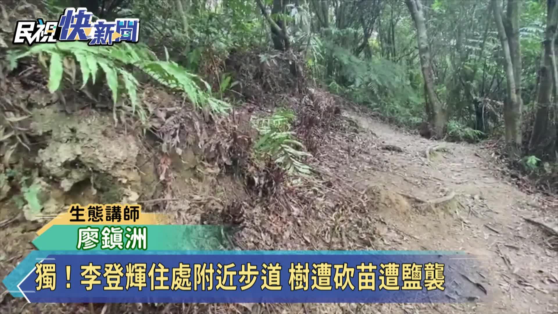 獨!李登輝住處附近步道 樹遭砍苗遭鹽襲