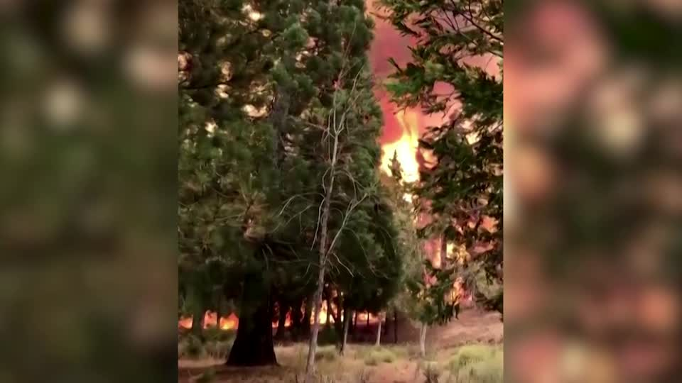 Massive flames engulf California national forest