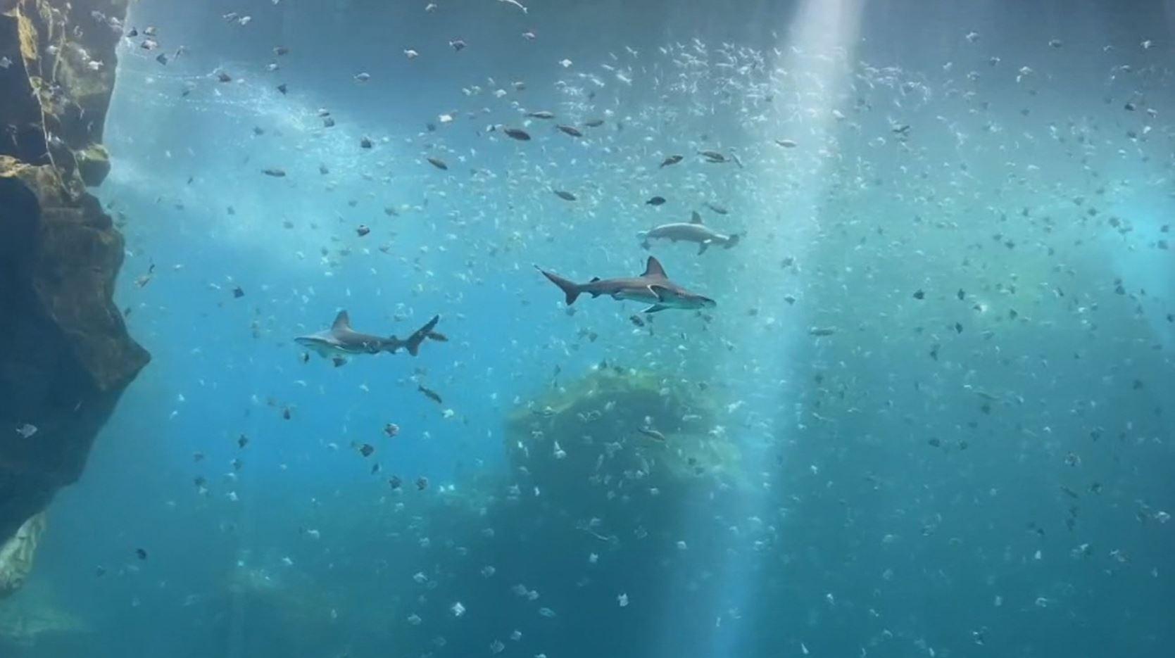「水母打結、鯊魚撞玻璃」 Xpark曝慘況!網怒:動物煉獄