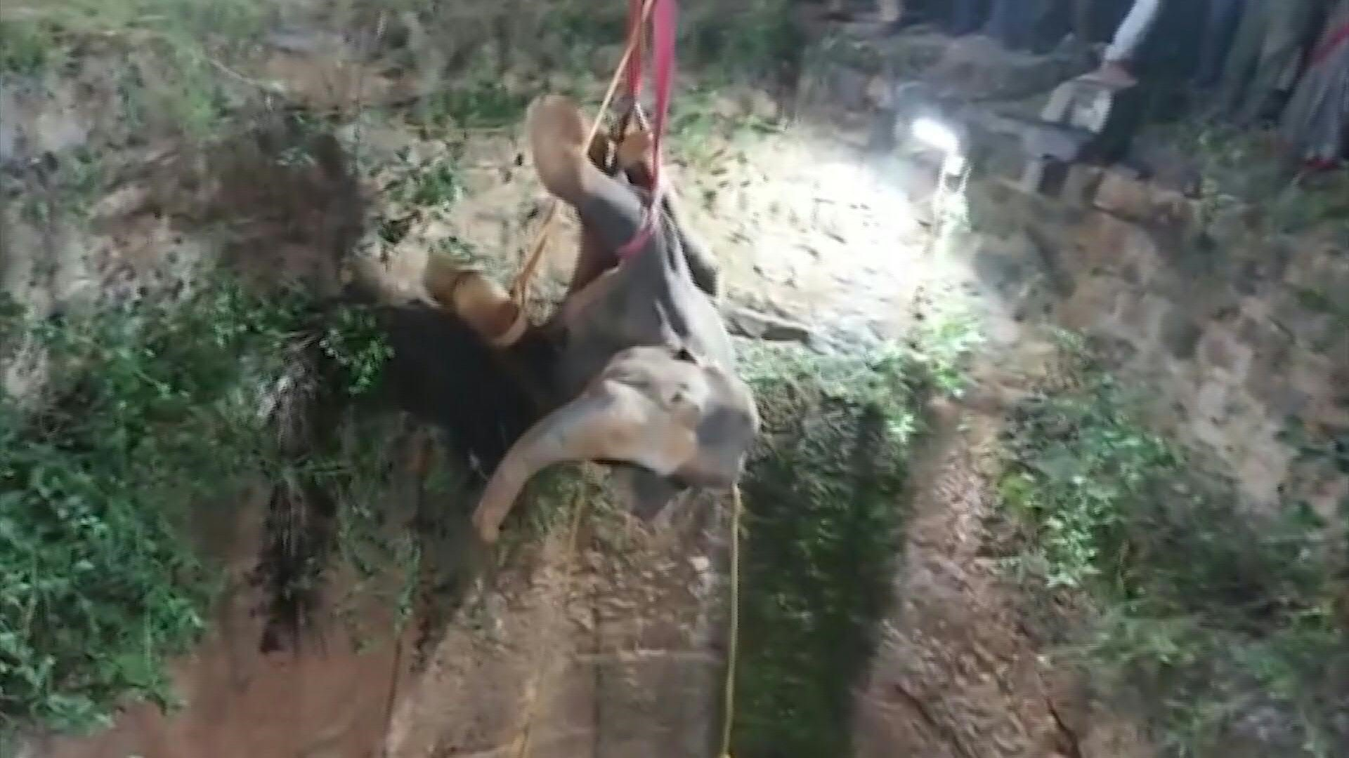 Jumbo task: Elephant rescued from deep well in India