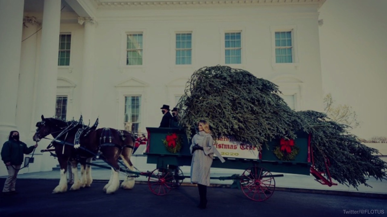 Twitter Is Dragging Melania Trump Over the White House Christmas Tree