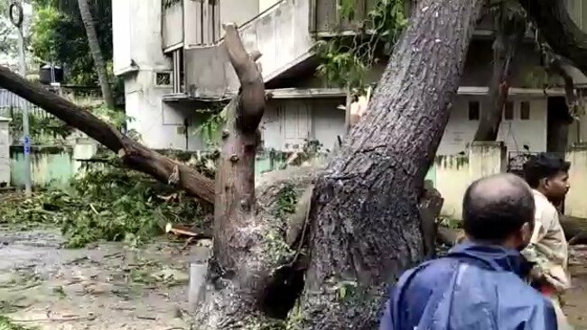 uk.news.yahoo.com: Tree Lands on Building in Chennai as Cyclone Nivar Hits India's East Coast