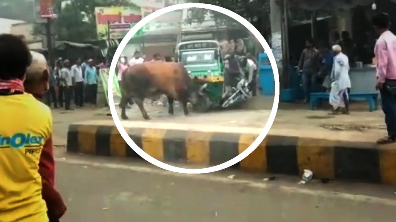 Bull Attack Rabatt Code