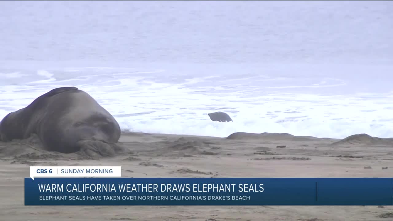 seals and nude beach