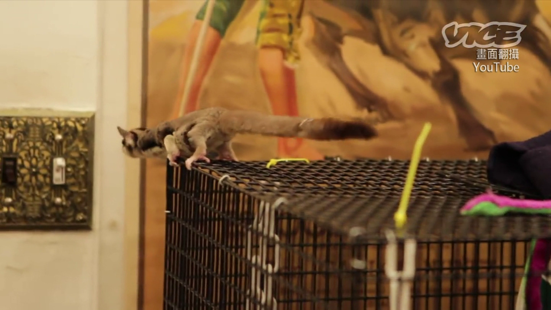 考學測遭寵物鼠「爬身」! 懲處待2/18考試委員會決議出爐