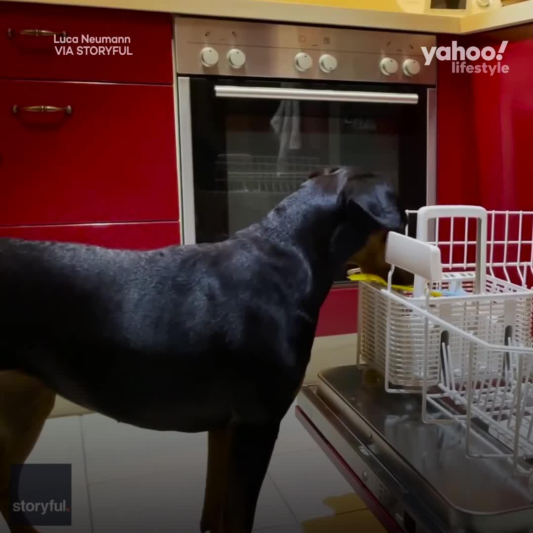 yahoo köpek kadın sikişi – Telegraph