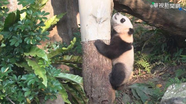 防疫關鍵期! 動物園.遊樂園人流管制