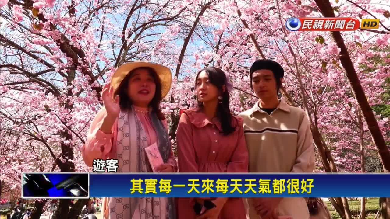 武陵櫻花季防疫升級 每日人數限6千人