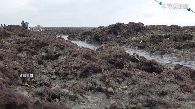 門檻達標!藻礁公投再拚至45萬份連署