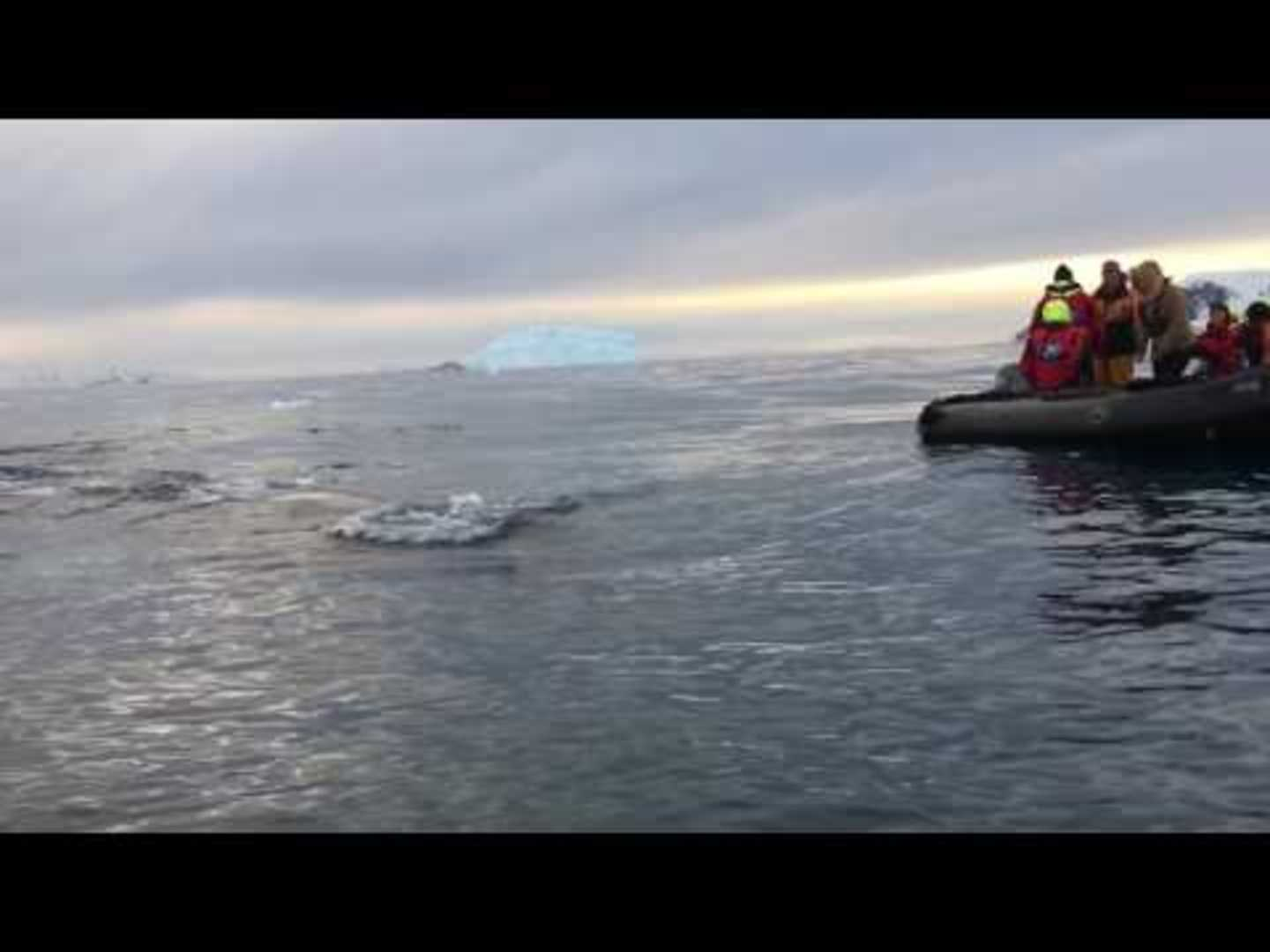 People Witness Whale Up Close During a Cruise With Experts In Antarctica - Yahoo News UK