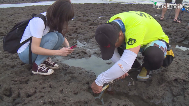 藻礁連署破50萬份 農委會邀環團溝通