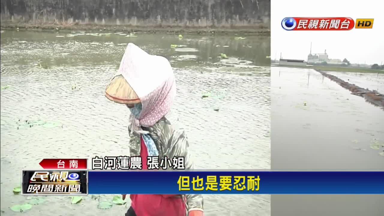 白河水庫淤積嚴重蓄水率0 文蛤缺水蛤肉太鹹
