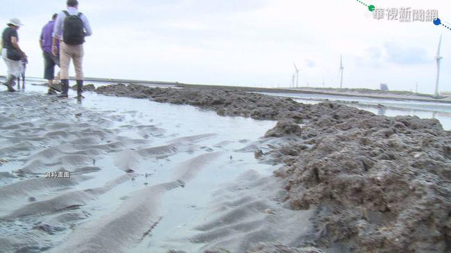 藻礁公投近70萬連署 500箱送台北暫存