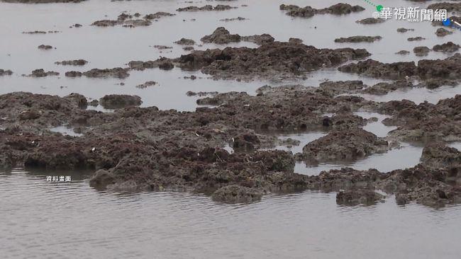 大潭藻礁爭議 工作機會.環保陷兩難