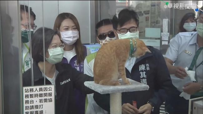 貓站長「蜜柑」寄信邀約 蔡英文南下探班